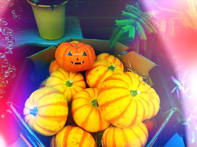 Optivion -Pumpkin