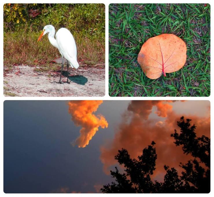 Optivion - Nature Pictures
