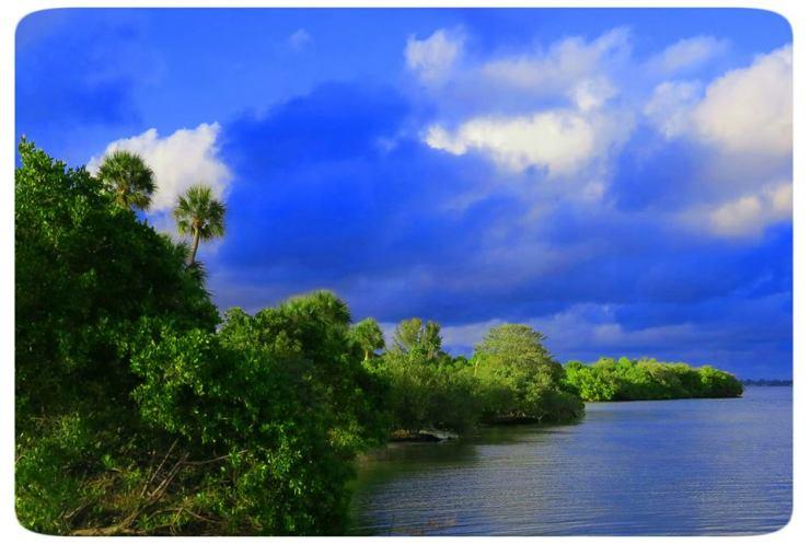 OptivioN - Treasure Island